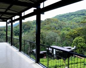 Rainforest Edge Sinharaja